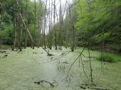 Im Land der 1000 Seen (grössere und kleinere)