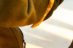 Die Junior-Ranger des Natur- und Tierparks Goldau lassen unter Anleitung eine Kornnatter über ihre Hände gleiten.